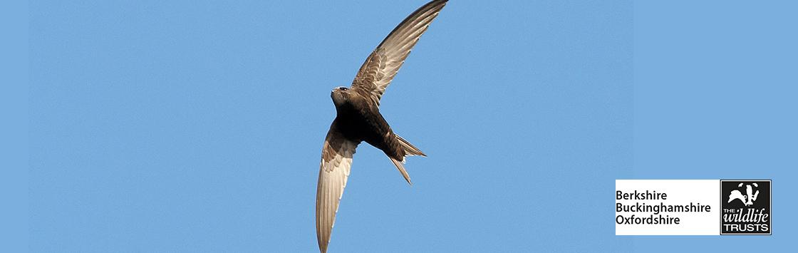 Talk: Swifts in Newbury